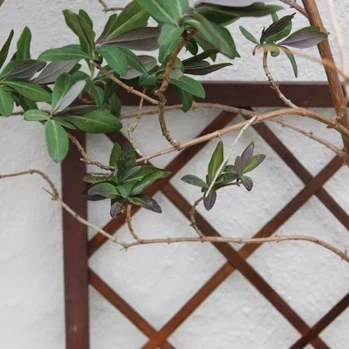 Plant growing against a wall
