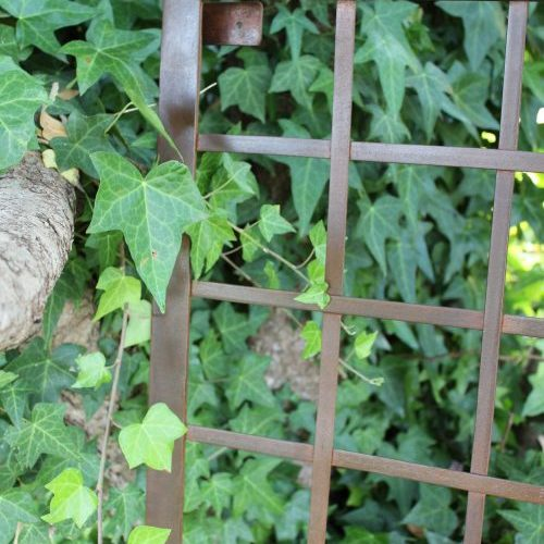 Iron Trellis and ivy