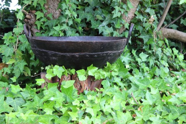 Iron planter in ivy
