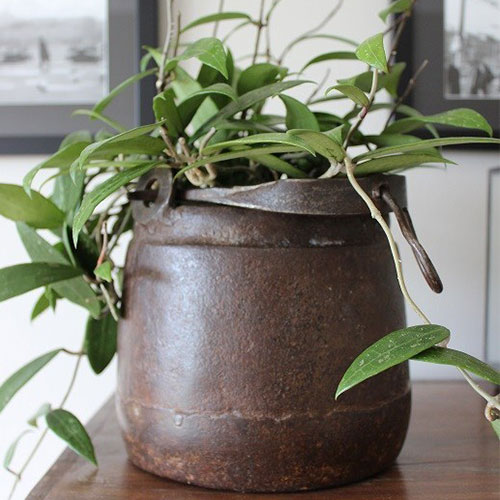 indoor plant in an iron pot