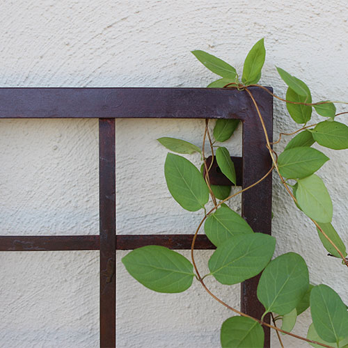 Top right corner of a metal trellis