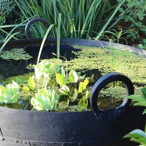 plants floating in a water bowl for a water garden