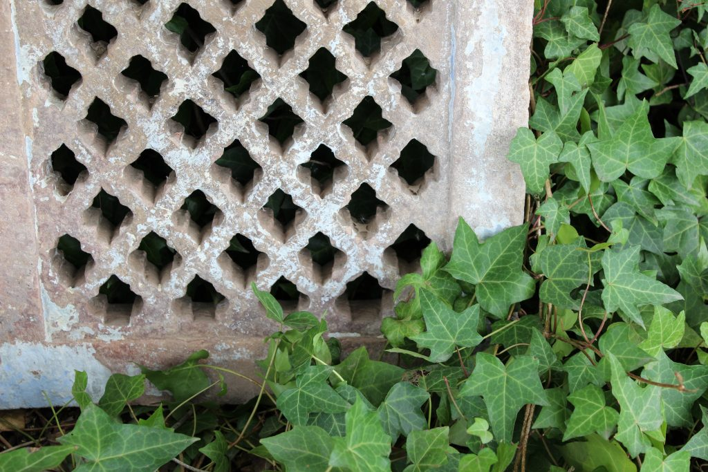 Stone jali in ivy
