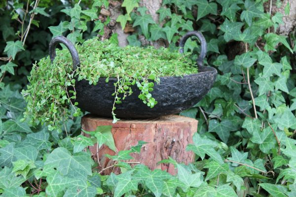 Indian cooking pot planted with succulents