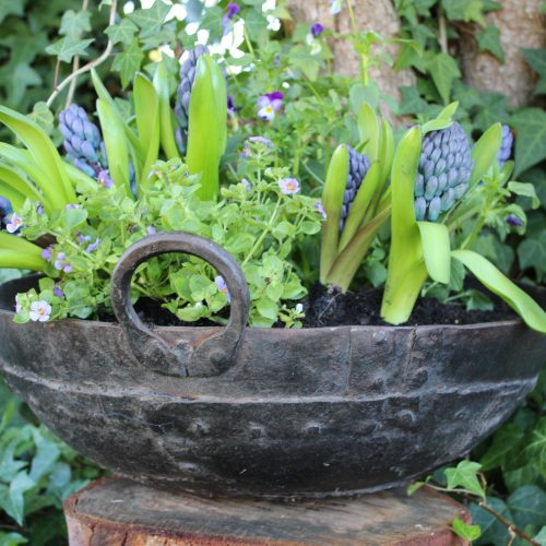 Iron planter with hyacinths