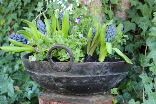 Old iron cooking pot with blue plants