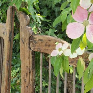 Timber gate and dogwood flower