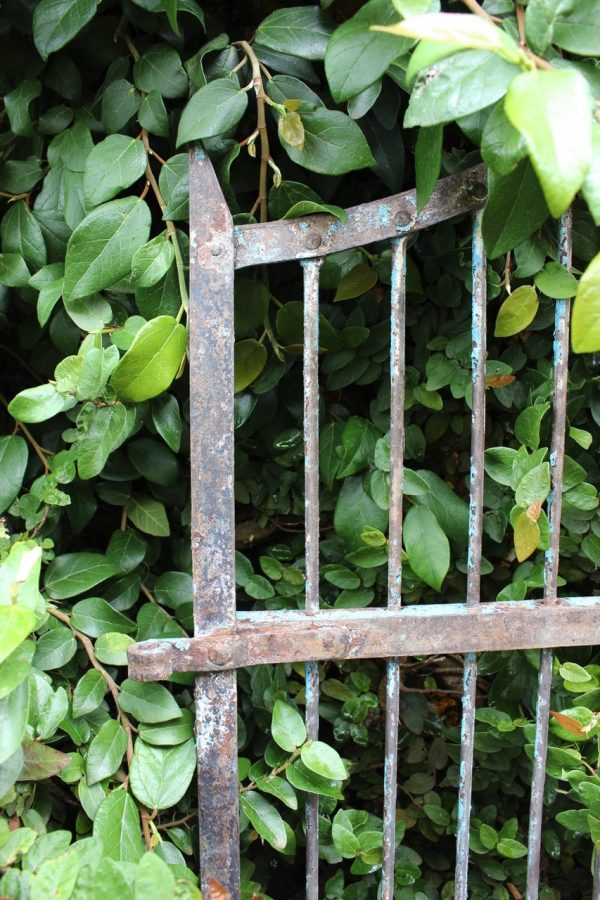 top of iron gate in creeping fig