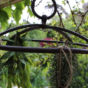 iron herb hanger