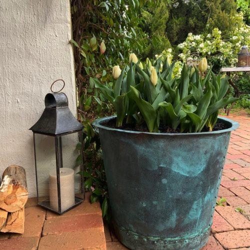 tulips in a copper planter