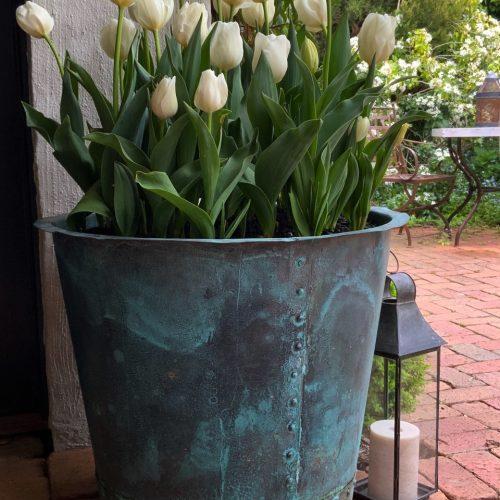 white tulips in copper pot